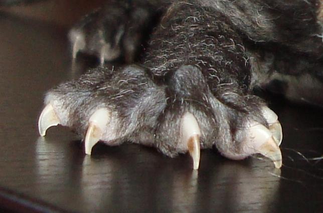 Договор Купли Продажи Животных Образец Скачать Бесплатно - фото 10